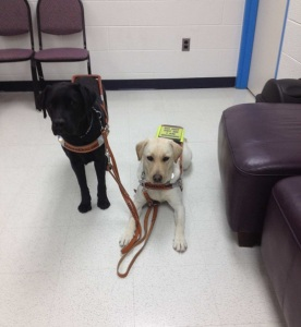 Jamie with her brother, Duko (also a service dog)