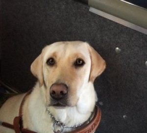 Jamie, one of our dedicated service dogs