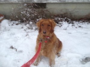 Maggie enjoying some rare southern snow!